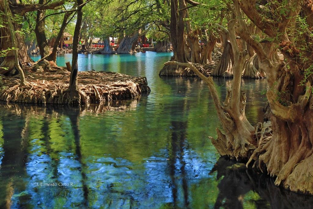 Mich lagoa