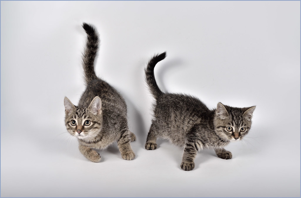 фотограф анималист Челябинск - фото котята