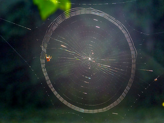 Wheel in a Wheel: early web | by fred1st