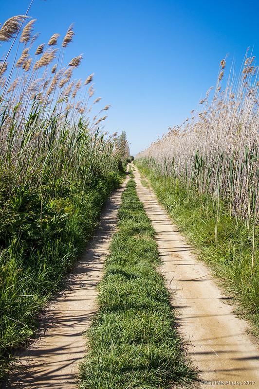 Camino al Aguait del Sabogal