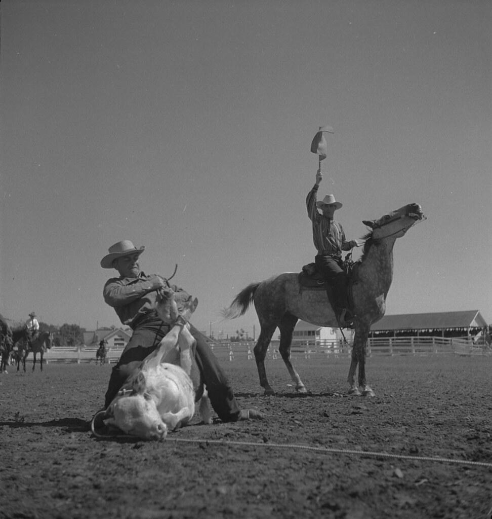 Cowboys Calgary Jobs