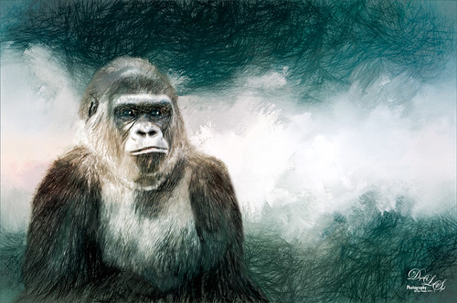 Image of a Gorilla from the Jacksonville Zoo in Florida
