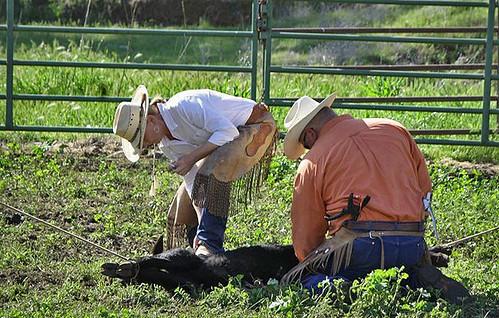 Mike Landini, Kathy Landini and a calf