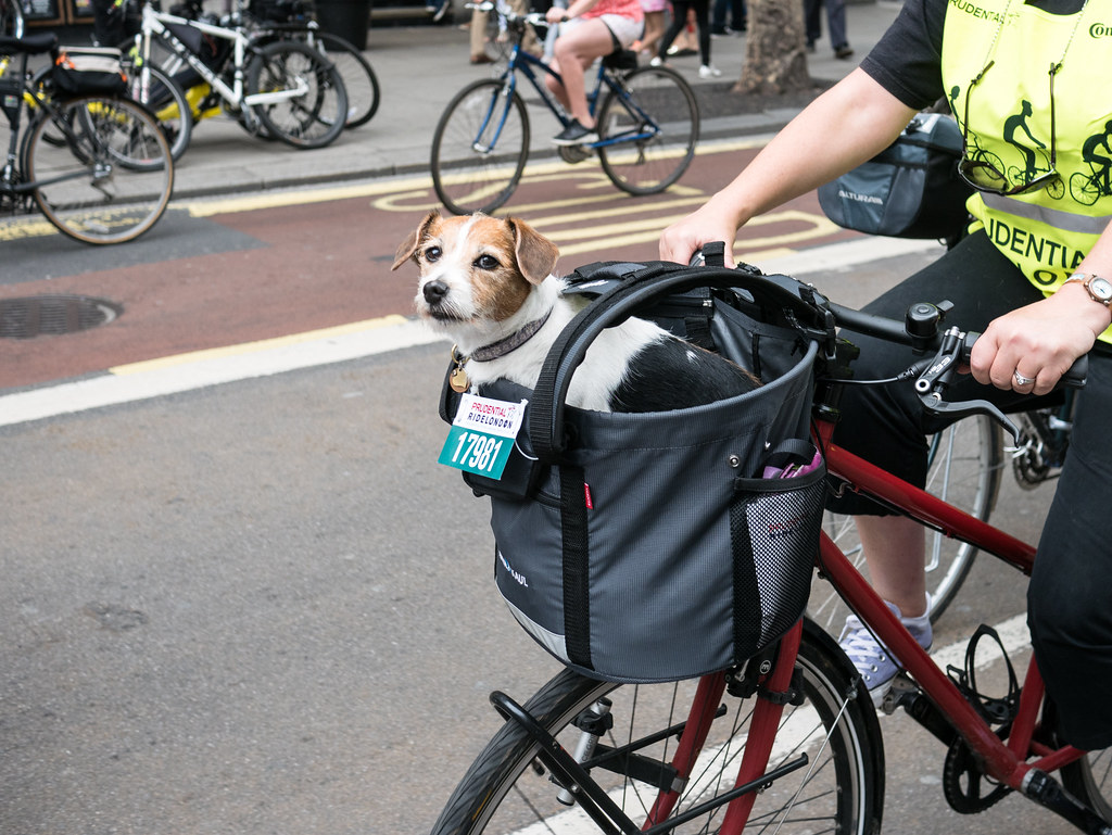 freecycle-london-dog-cycling-brompton-barbour-velocitygirl