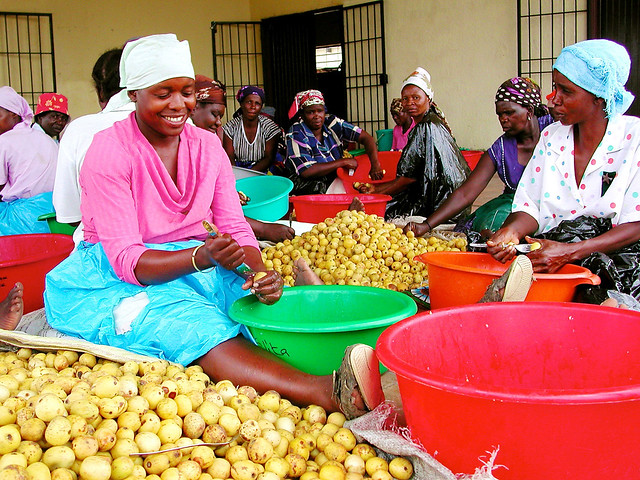 Peeling the marula fruit to separate the kernel, for the oil, and the pulp in South Africa.
