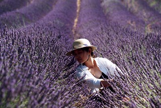 Lavander and me | by amarylliss