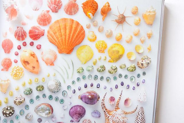 rainbow arrangement of shells