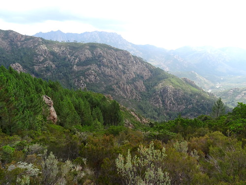 Le vallon du Ricu depuis Bocca di Ricu