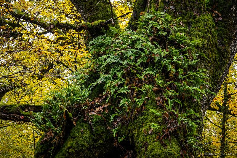 Musgo y helechos sobre el tronco de un árbol