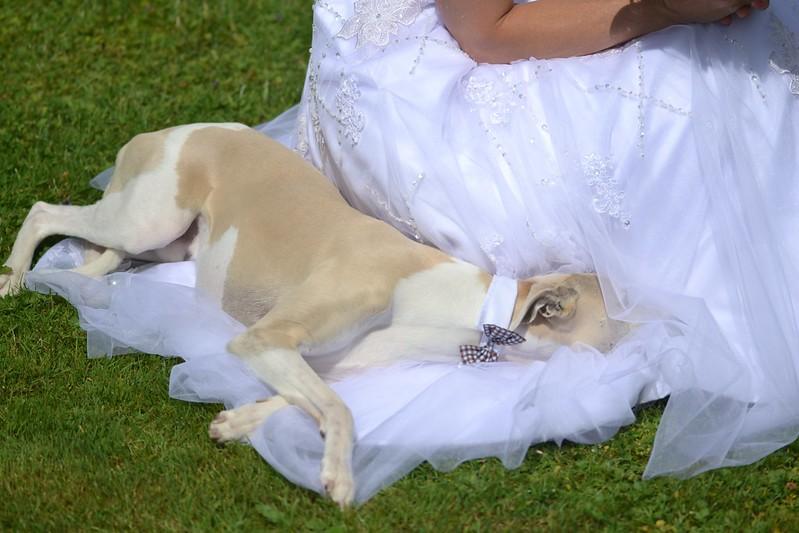 So eine Hochzeit ist schon anstrengend!