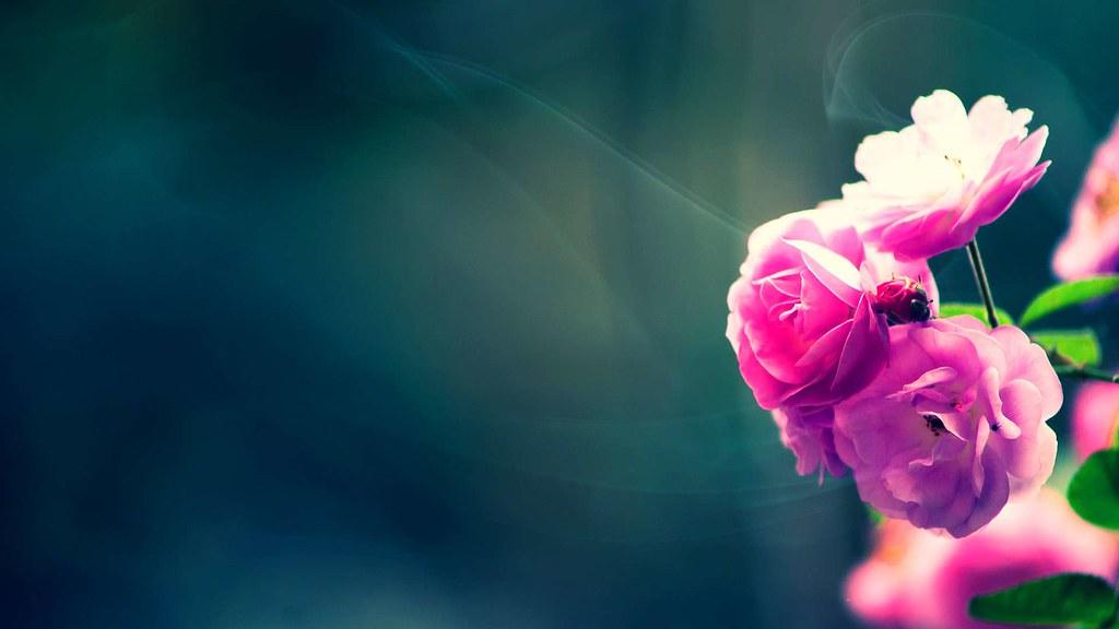 Beautiful Flower Wallpapers Hd Full Hd Wallpaper 1080p F Flickr