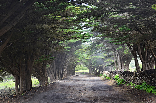 Tree avenue, El Hierro, Canary Islands