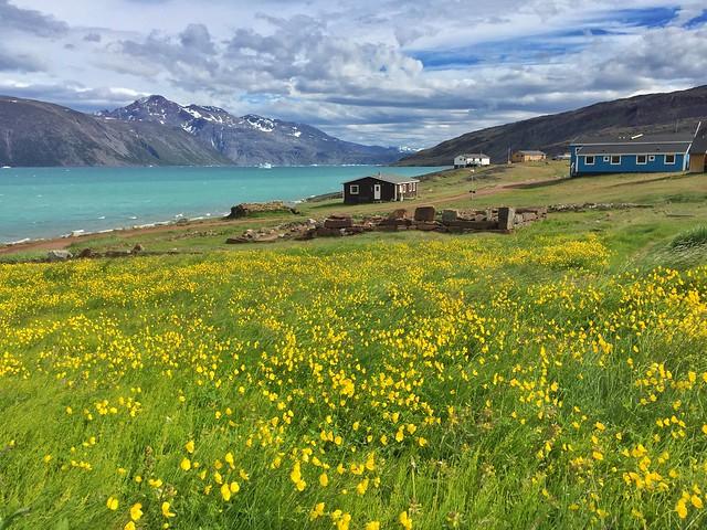 Paisaje florido en Groenlandia