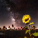 Sunflowers & Milky Way
