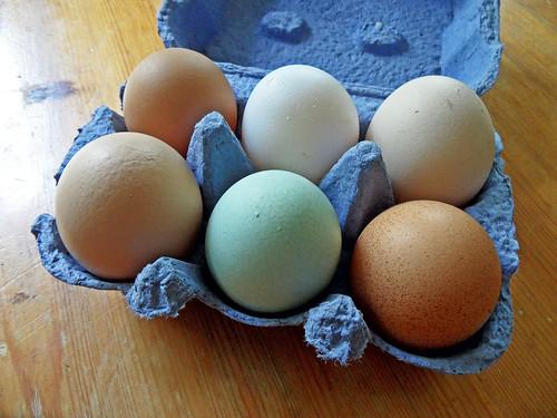 Hühnereier in verschiedenen Farben und Größen