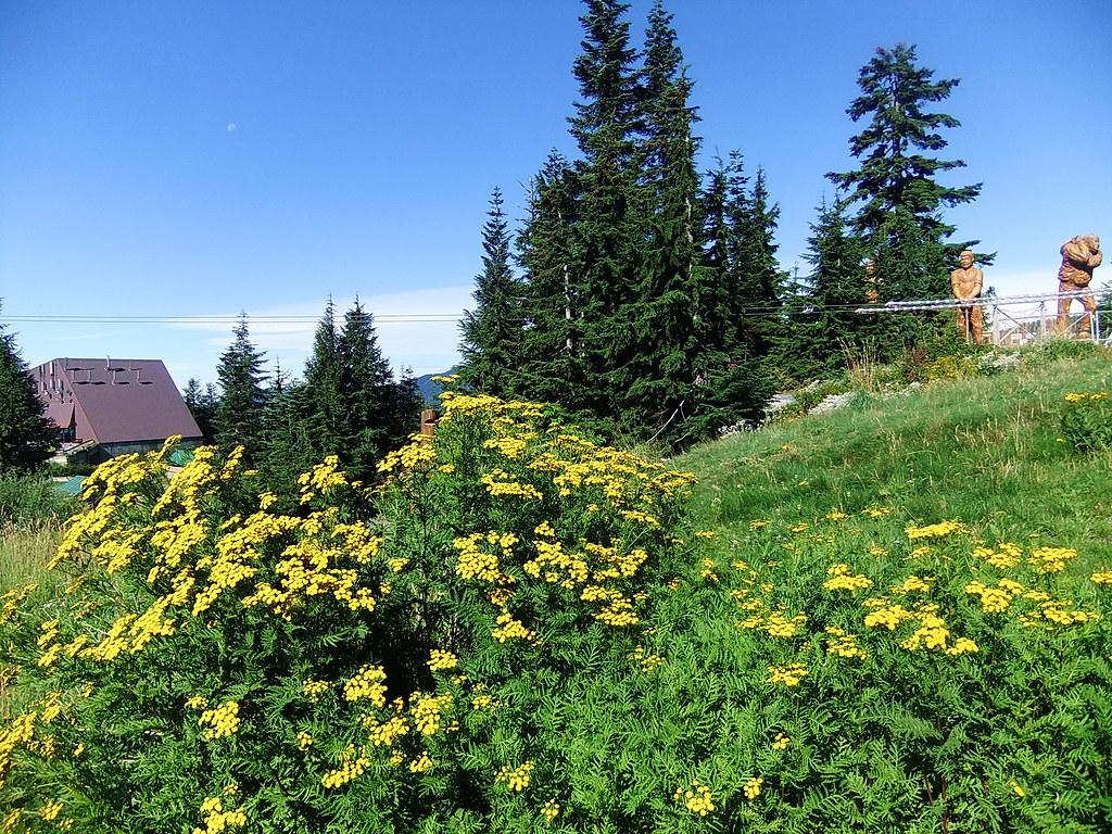 Grouse Mountain Summer Meadow Explore
