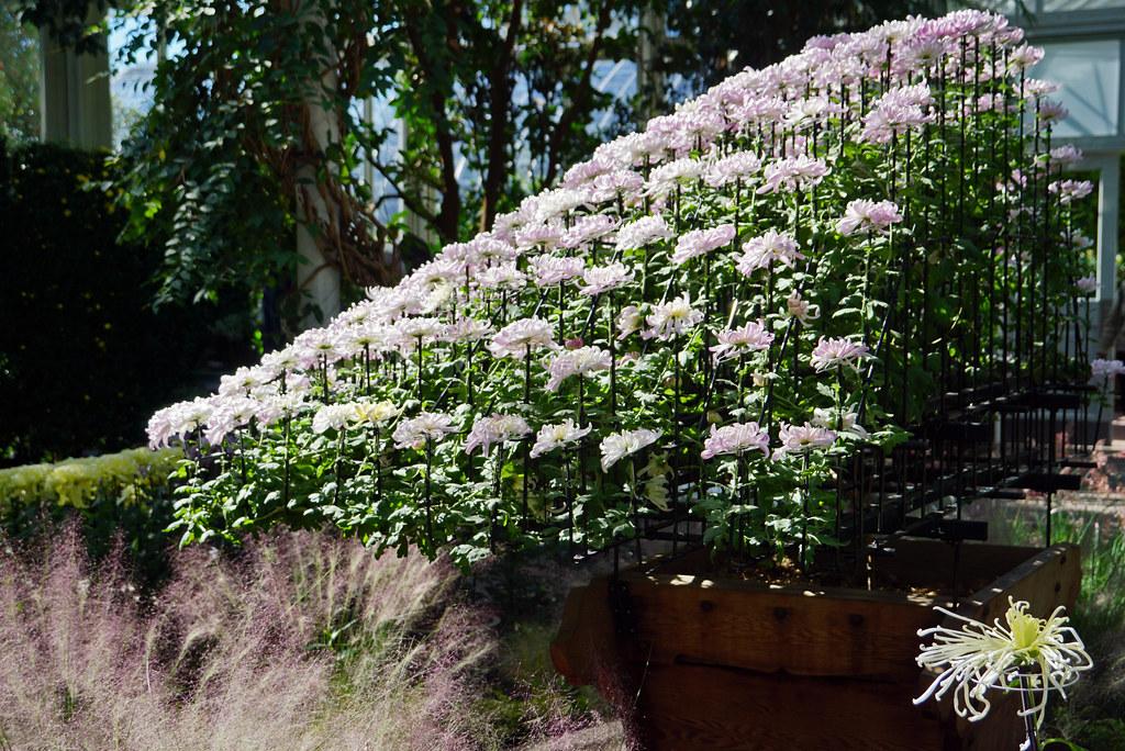 Ozukuri - Kiku exhibition - New York Botanical Garden, Bro… | Flickr