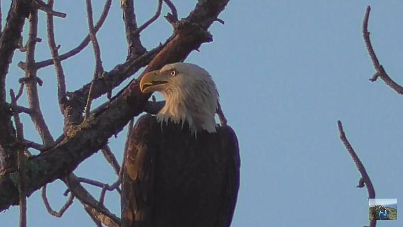 Swfl Eagle Cam >> M15 8-8-17 VickiOhsann | Morning of August 8, 2017. Photo sh… | Flickr