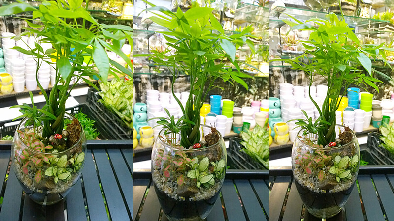 tieucanh24h.com   cay xanh   tieu canh cay xanh