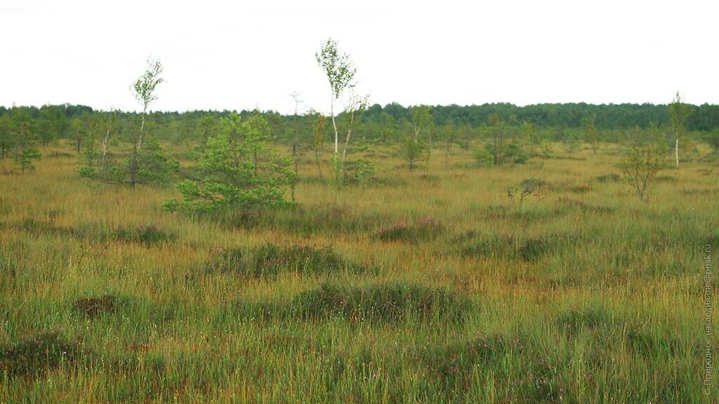Raised bog Bolshoe in Chernyakhovsk, Kaliningrad Region, Russia
