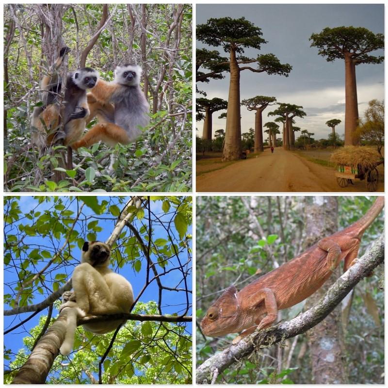 獨特且豐富的生物多樣性正是馬達加斯加迷人之處。攝影:賀彥儒