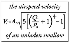 airspeed velocity of a swallow | by sickbag_andy