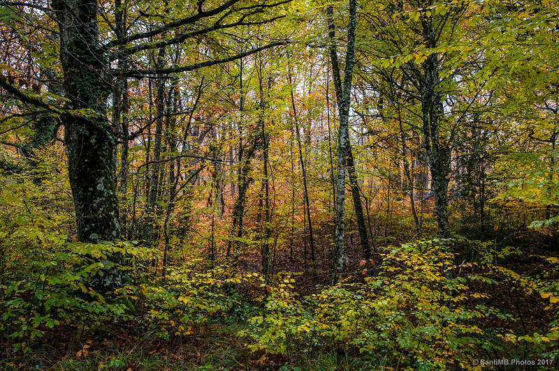 En el bosque de los Robles Milenarios de Danbulintxulo