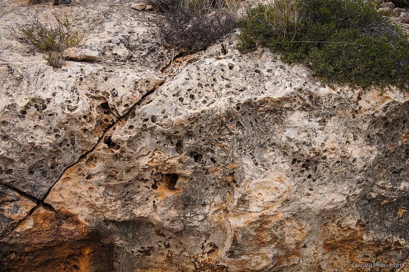 Roca de coral fósil Porite en la Mesa Roldán