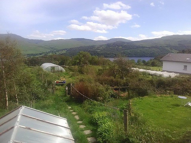View of poly tunnel in the garden