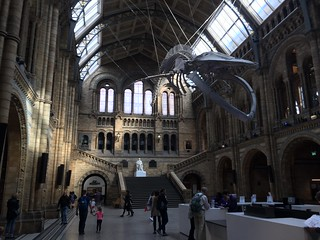 Hanging whale in the Natural History Museum | by Matt From London