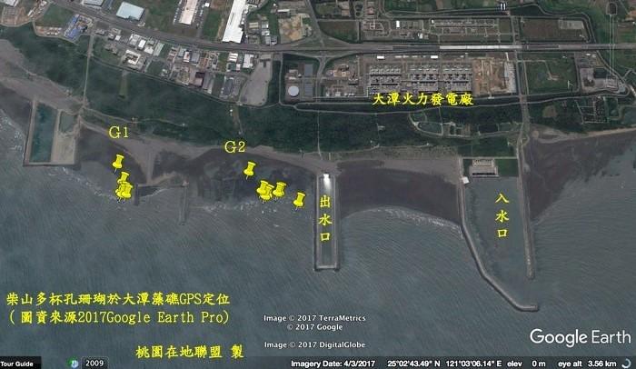 柴山多孔杯珊瑚於大潭藻礁GPS定位(桃園在地聯盟製)