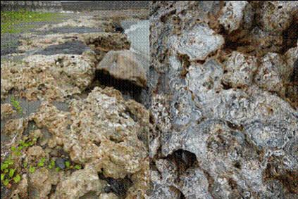 恆春半島旭海地質抬升後的藻礁(左圖)及化石藻礁(右圖)。(劉少倫拍攝)