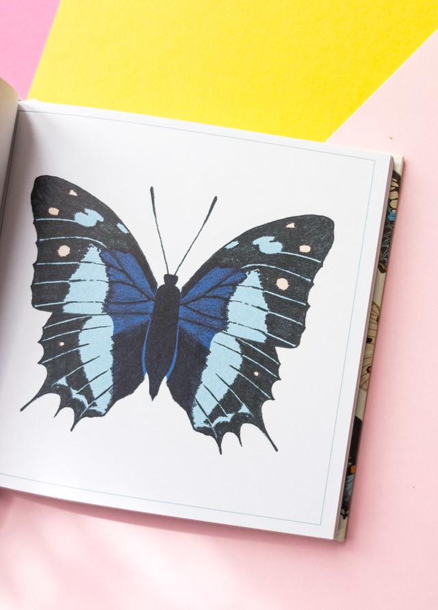 blue butterfly - little guide to butterflies