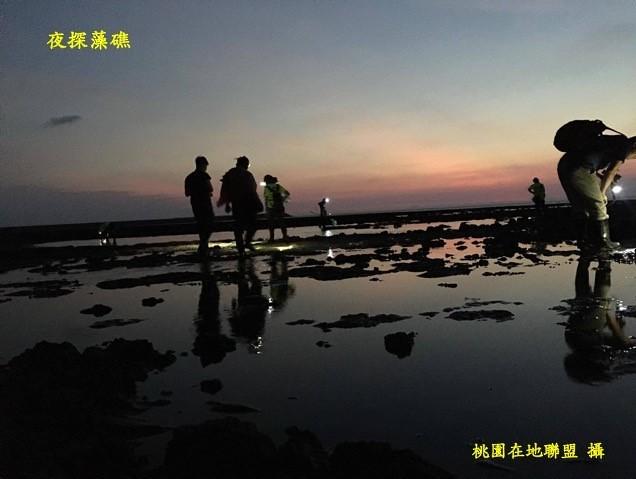 夜探藻礁(桃園在地聯盟攝)