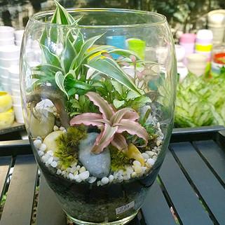 tieucanh24h | tieu canh | tieu canh khong khi | terrarium | art plant | cay khong khi