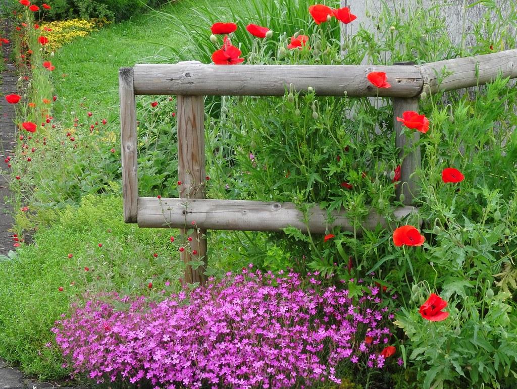 160603 Blumen Zaun Einfahrt 2 Karl Muller Flickr