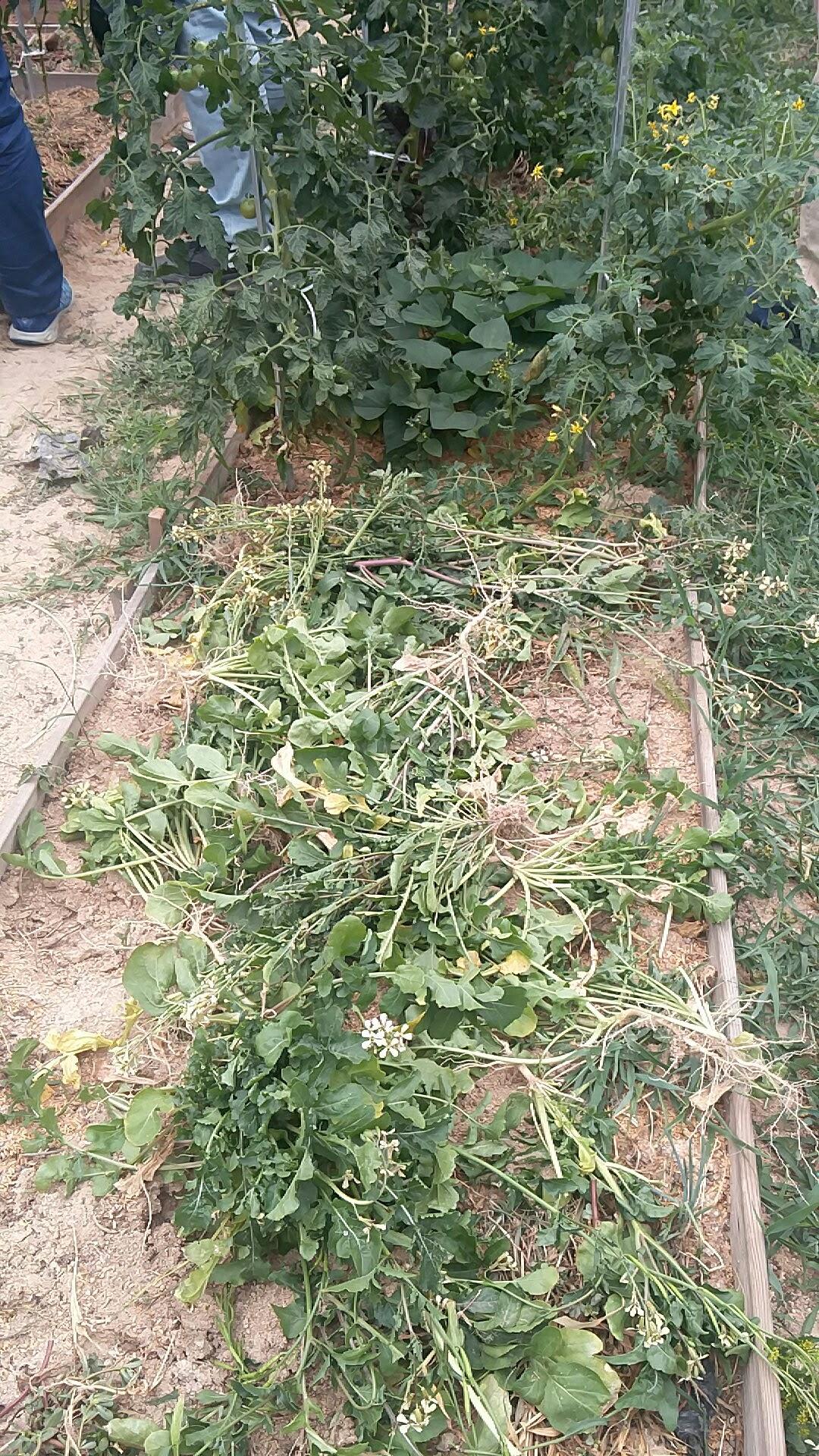 꽃피운 루꼴라-'도시농업 (school of urban agriculture)'