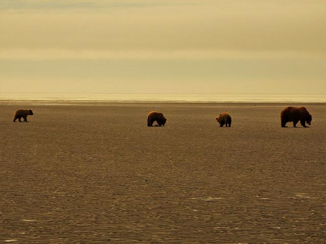 Familia de osos en una playa de Lake Clark (Alaska)