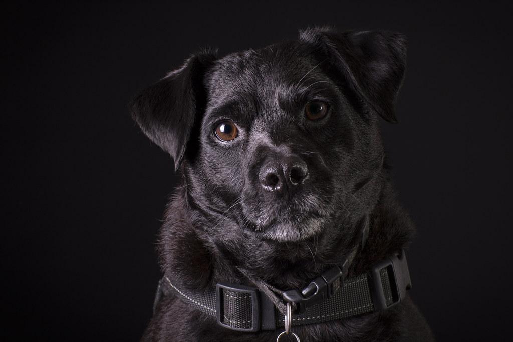 Milton Keynes Dog Day Care