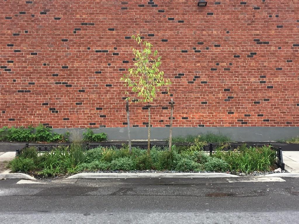 Rain Gardens in Maspeth, Ridegwood, and Sunnyside | NYC Water | Flickr