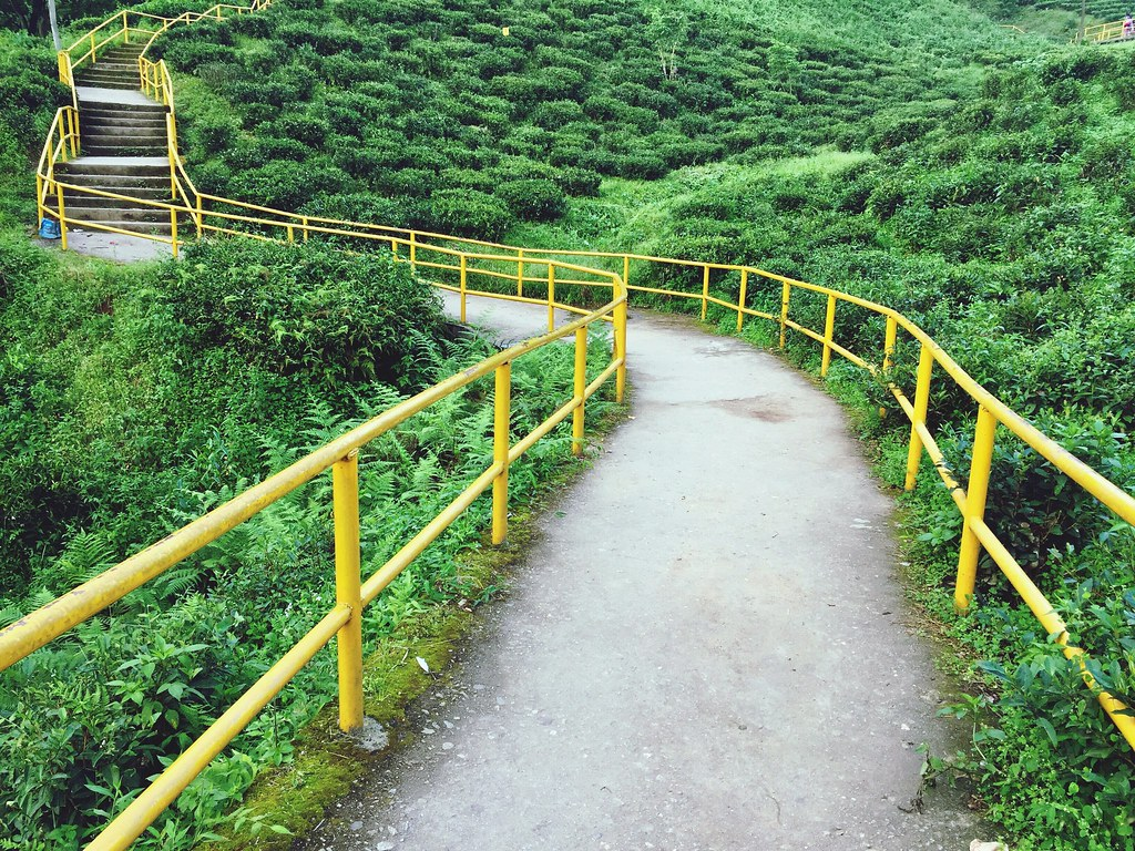 100 Shades Of Yellow Railing Staircase Steps The Way Forwa…   Flickr