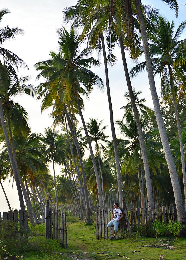 Esperando al atardecer entre palmeras