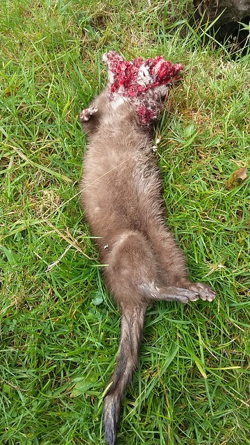 how to get rid of mink