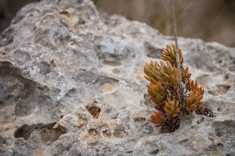 Pequeña planta en un hueco de una roca en la cara norte de la Mesa Roldán