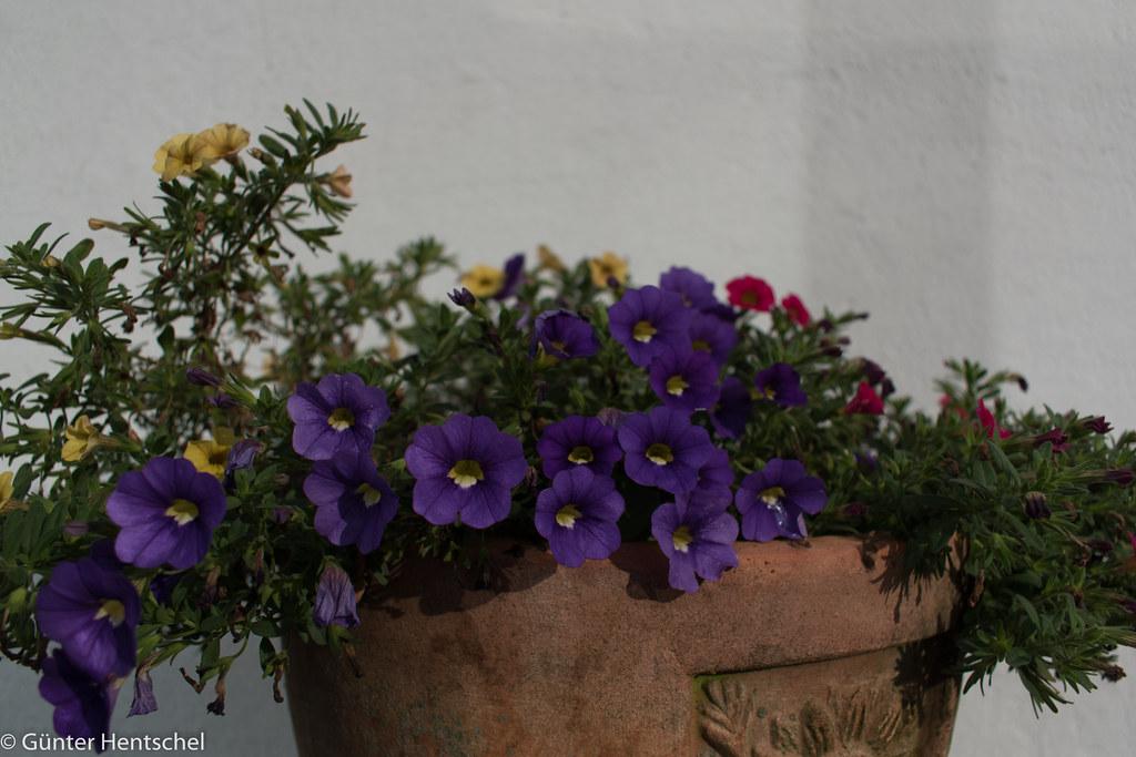 Garten Im September unser garten im september 2017 der name der blümchen kenne flickr