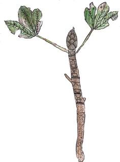 22 foglie secche e deteriorate