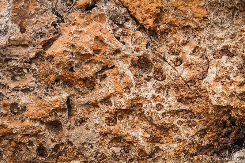 Roca de Porites fósil en la Mesa Roldán