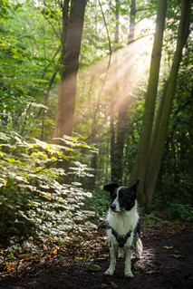 Sunlight | by MelissaW Dog Photography