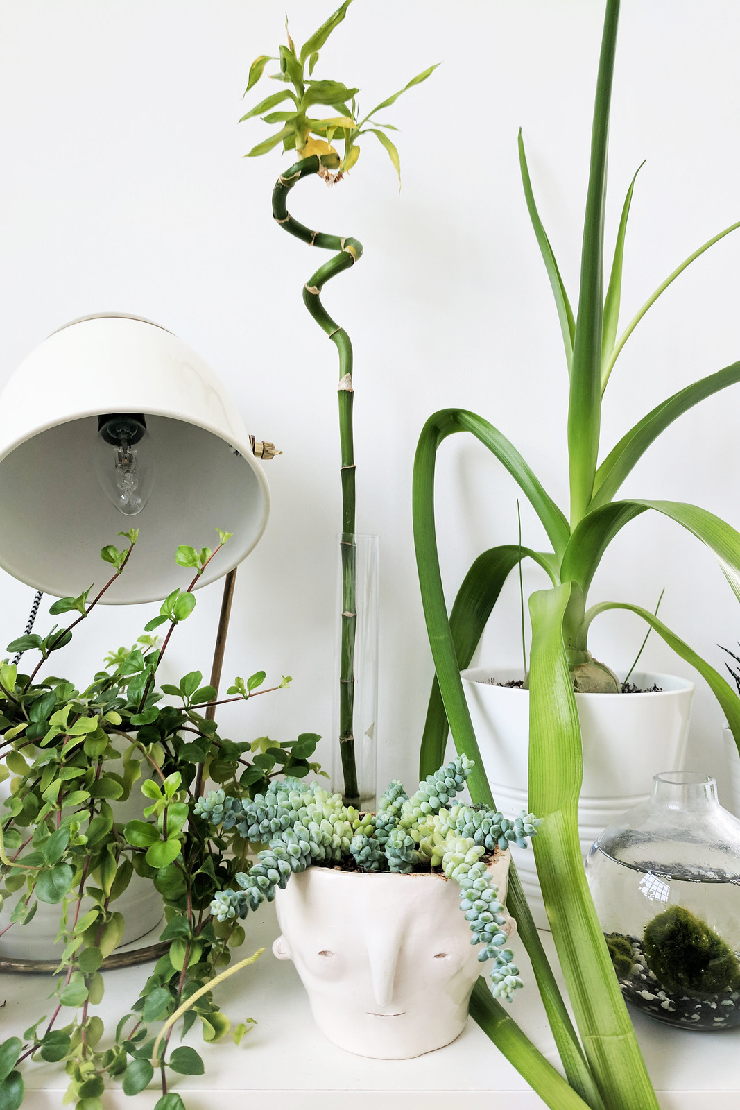 The Best Ways To Display Indoor Plants