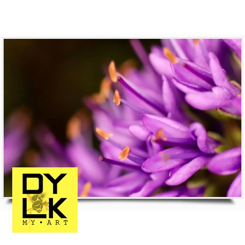 dylk Macro-flowers. —...
